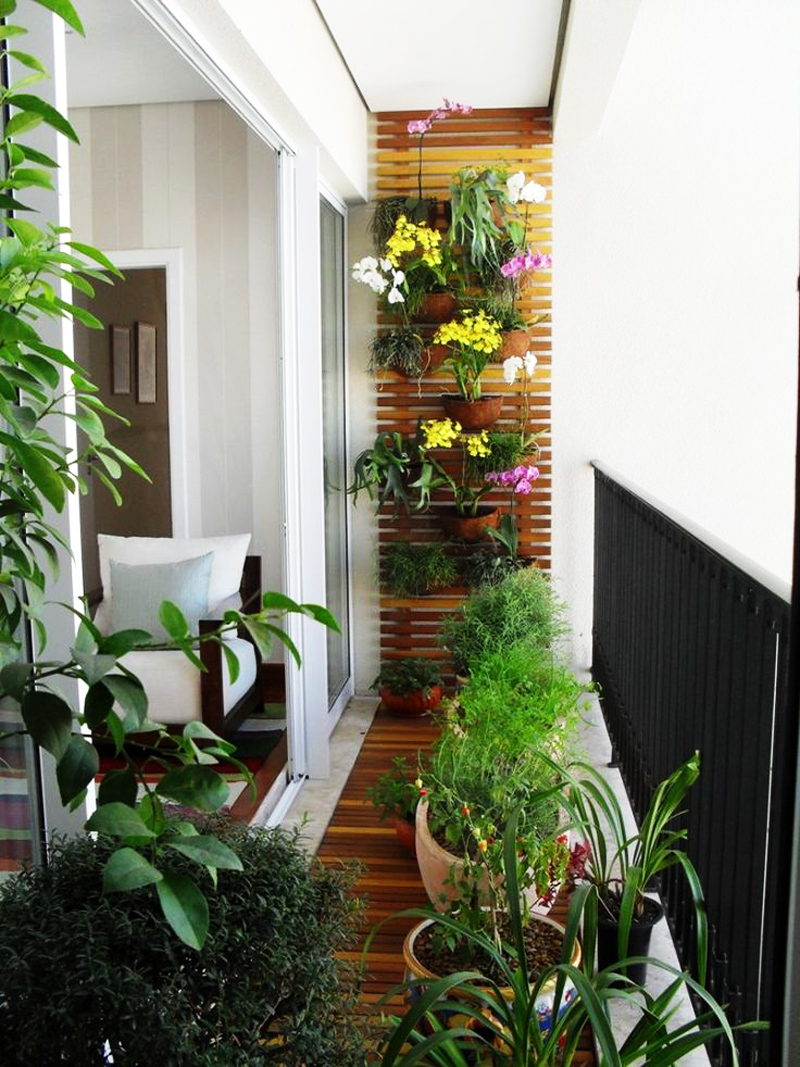 Apartment balcony plants: succulents plants sydney: november ...