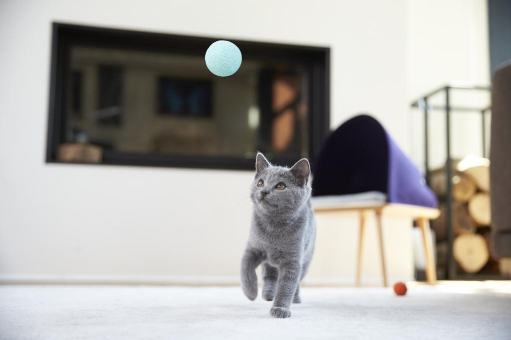 мебели за котки - 3