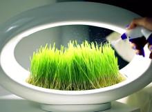 лампа, в която се отглеждат растения_10