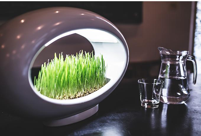 лампа, в която се отглеждат растения_1