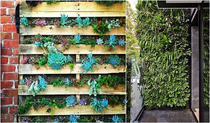 вертикална градина на терасата
