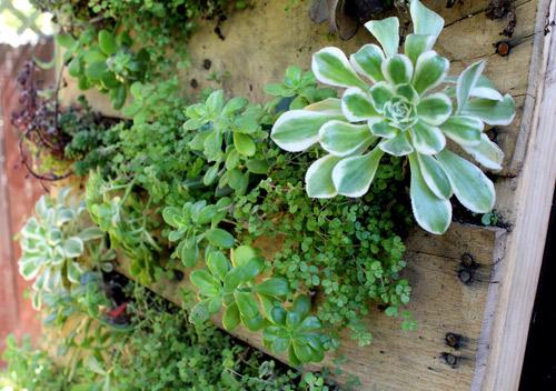 вертикална градина_2