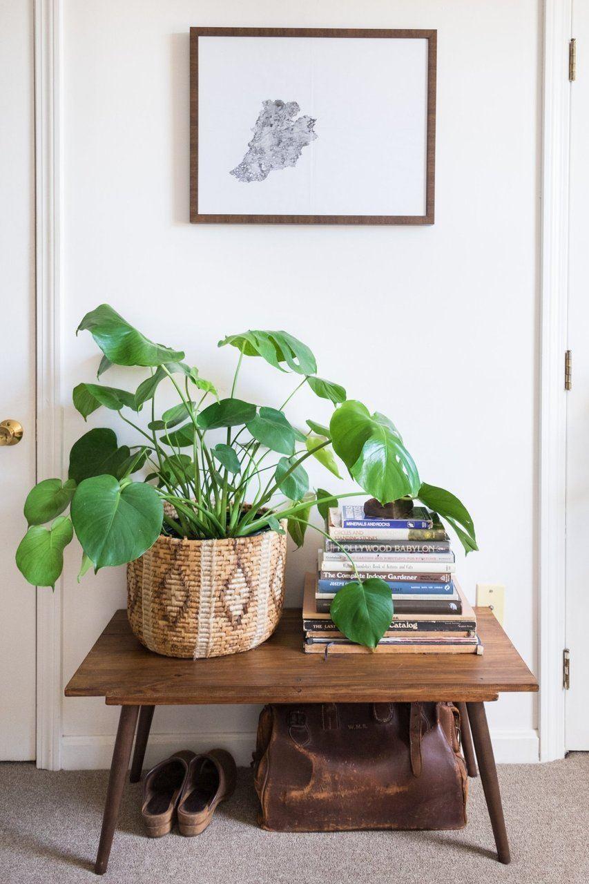 растения в кошници