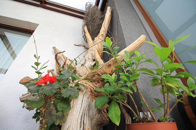клон за декорация тераса 2