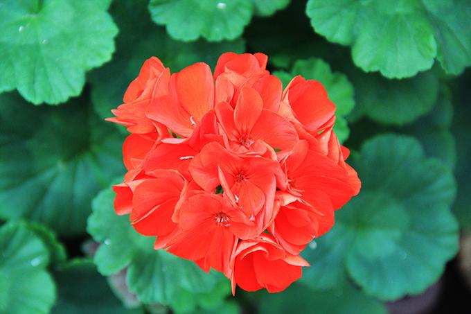 тераса цвеtя